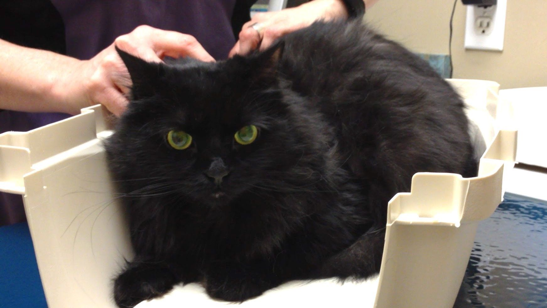 ShoKo at the Vet! Cats and kittens, Cat gif, Pet care