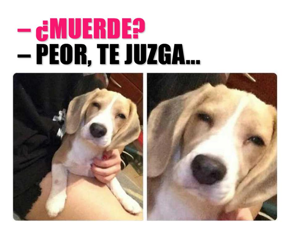 Cuidado Que Te Juzgue Memes Perros Memes De Chicas Chistes De Perros