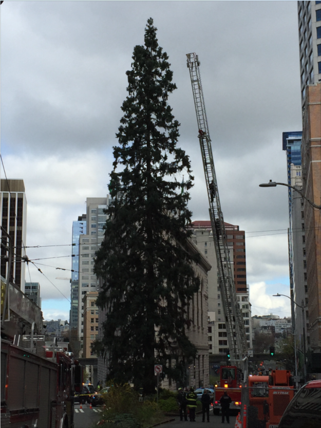 Police Coax Down A Man Who Refused To Leave An 80-Foot Tree