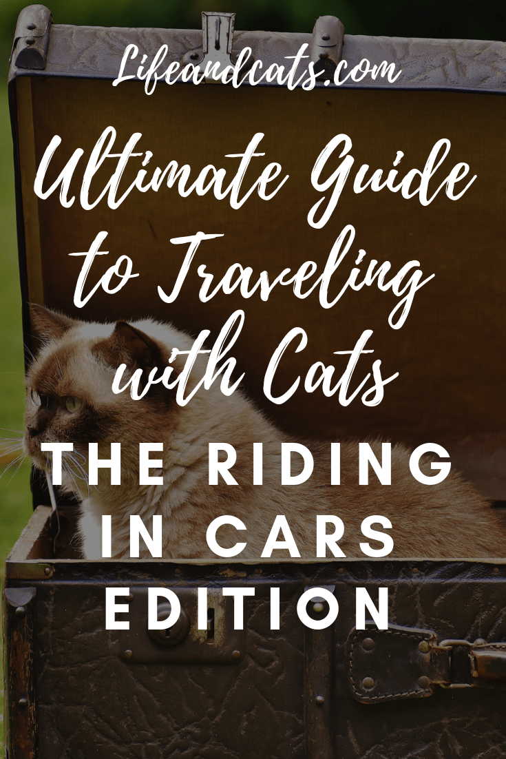 The Ultimate Guide to Traveling with Cats the Riding