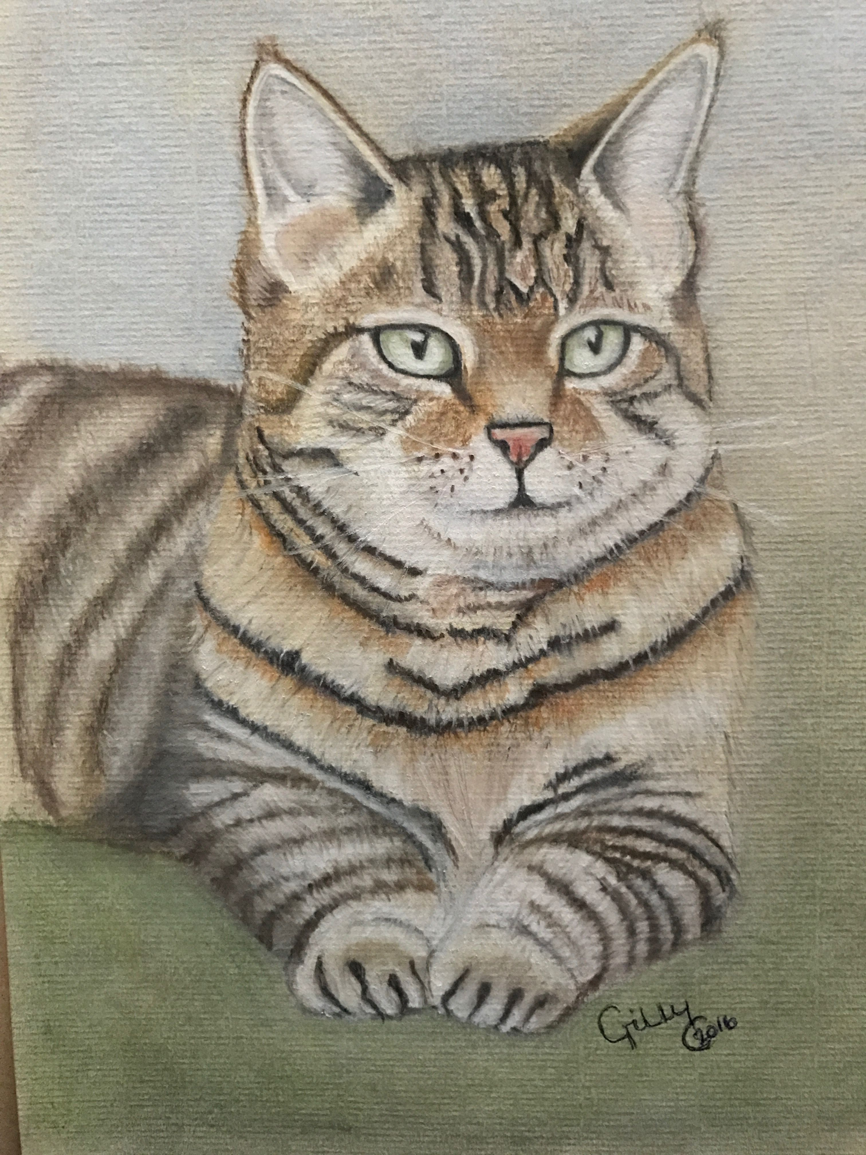 Pastel pencil drawing of Tabby cat