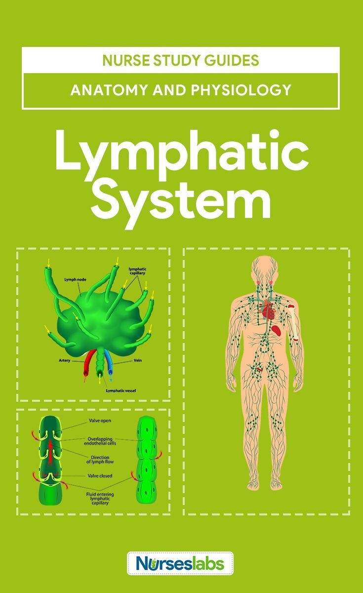Lymphatic System Anatomy and Physiology | Lymphatic system, Nursing ...