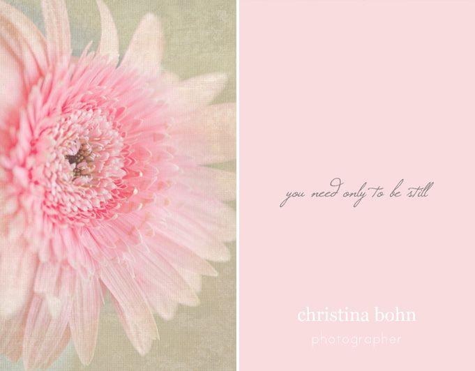 http://www.christinabohn.com #gerberdaisy