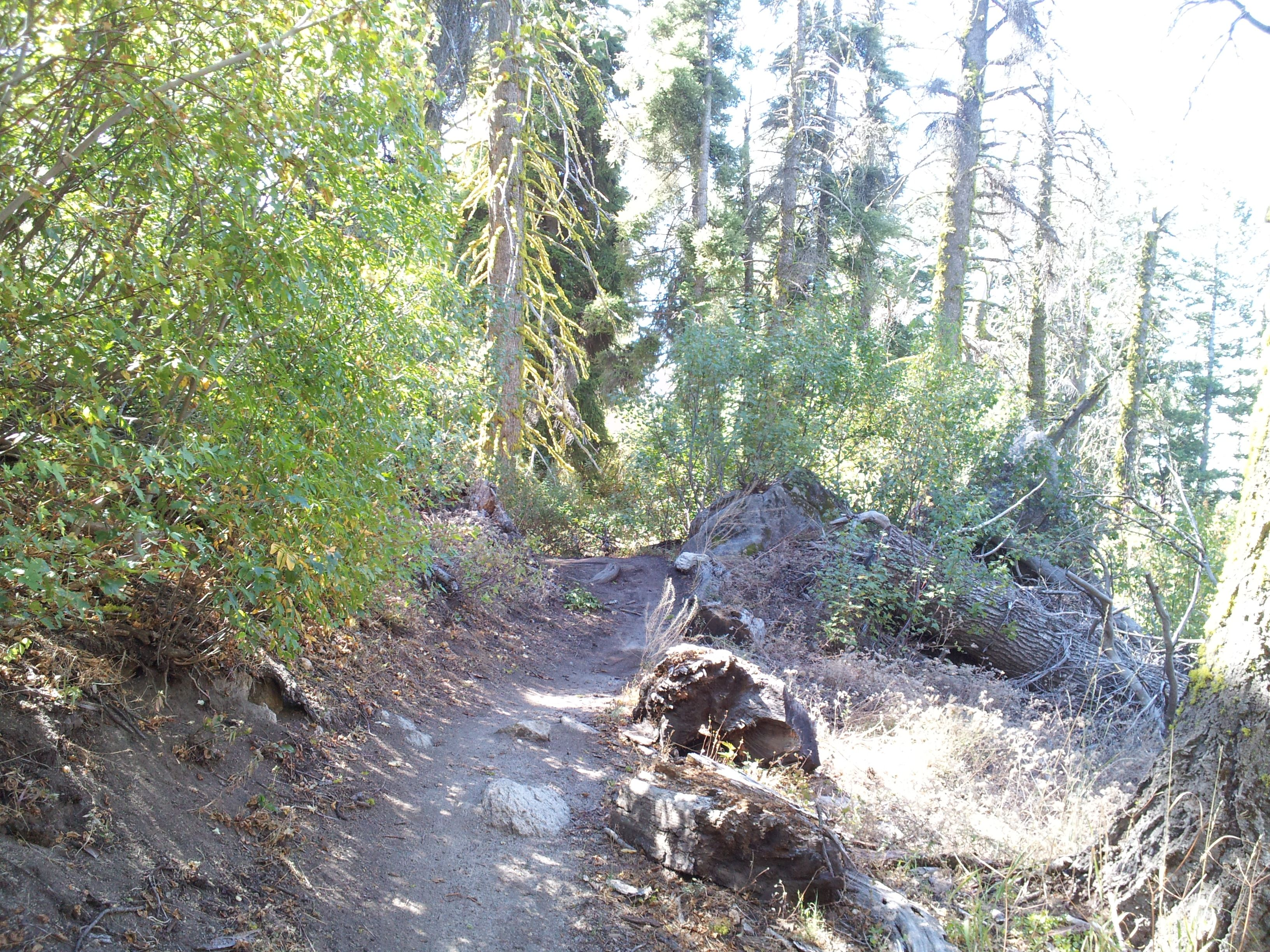 Pin by teresa cook on mtn biking mountain trails idaho