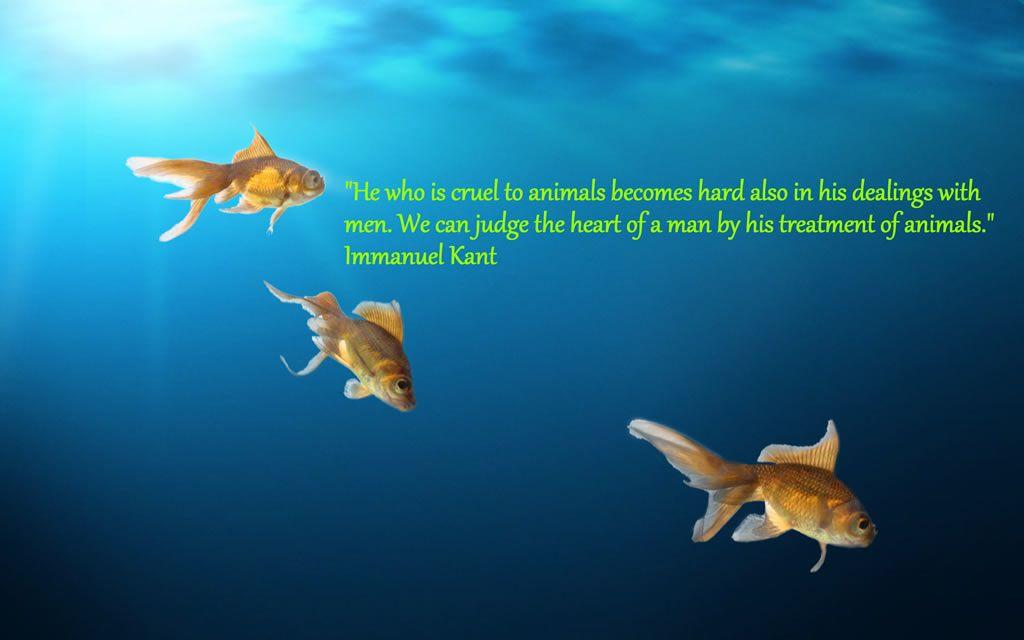 Fish Lover - Animal Quotes   Aquarium Network   Freshwater aquarium
