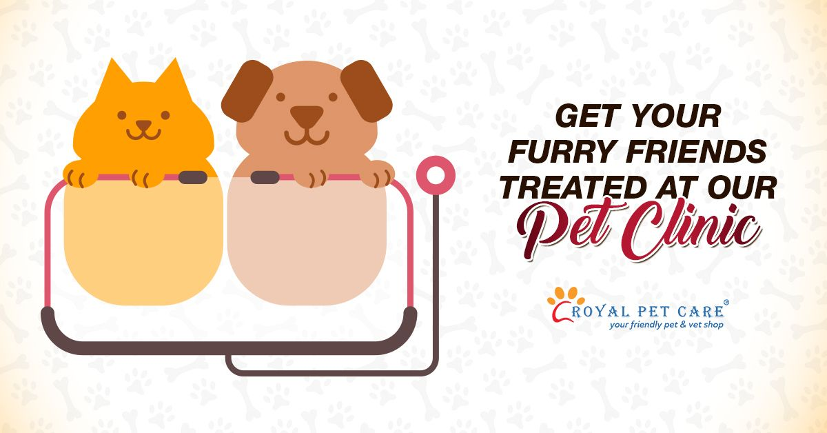 Concerned About Your Pet S Health Consult Our Qualified Veterinarian Today Our Pet Clinic Is Open On Weekdays As Wel Pet Clinic Dog Boarding Near Me Pet Care