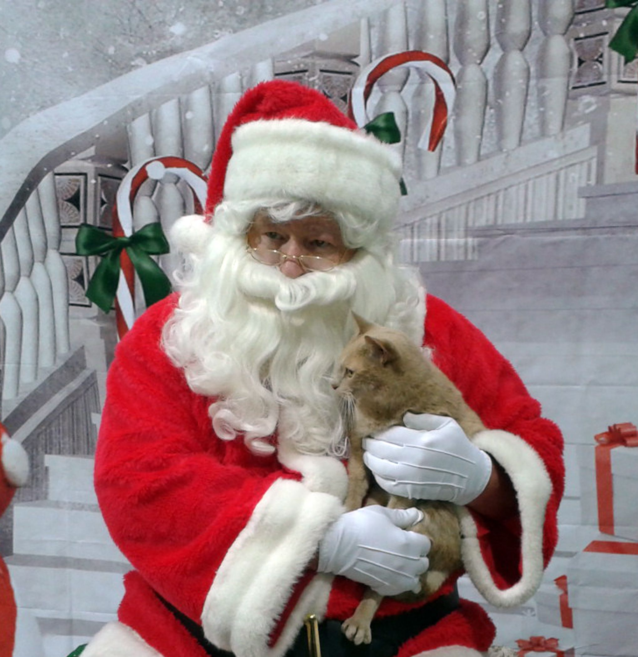 Merry Almost Christmas!  December 24, 2014   http://rikkisrefuge.blogspot.com/2014/12/merry-almost-christmas-december-24-2014_24.html