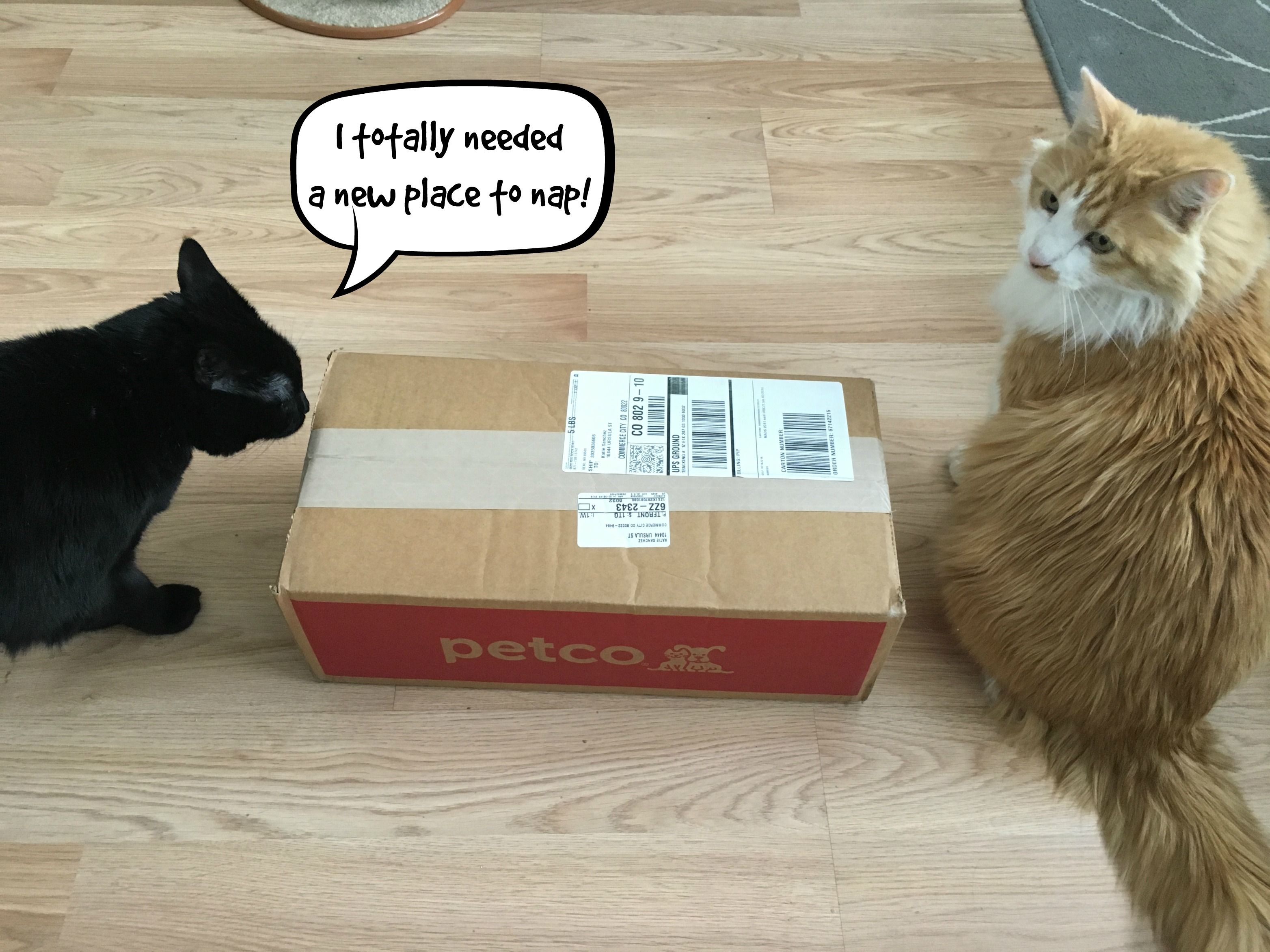 Repeat Delivery By Petco Petcodelivers But I Want A Pony Petco Family Pet Fur Kids