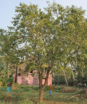 Pin By Taha Otefy On Fruit Trees Part1 4 Fruit Trees Plants
