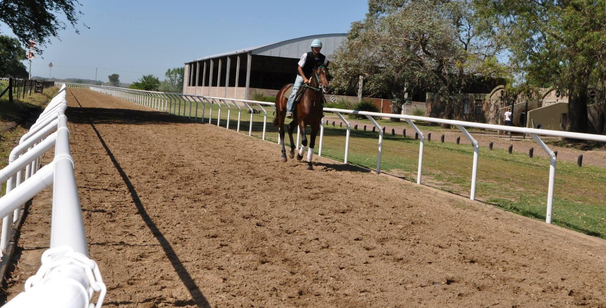 servicio de vareo, training y pre training caballos de carrera SPC                                                                                                                                                     Más