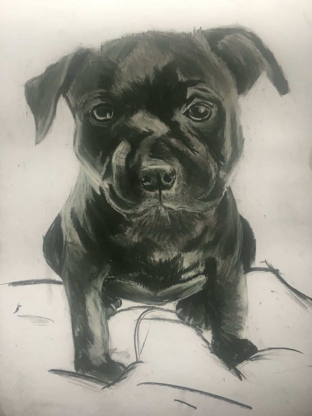 Pup on a bed # #charcoal #drawing #art #dog