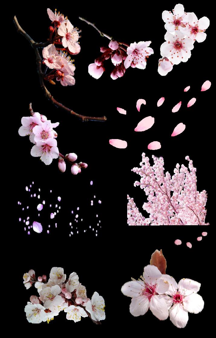 Flor De Cerezo Png By Https Nayareth Deviantart Com On Deviantart Abstract Artwork Graphic Design Inspiration Png Icons