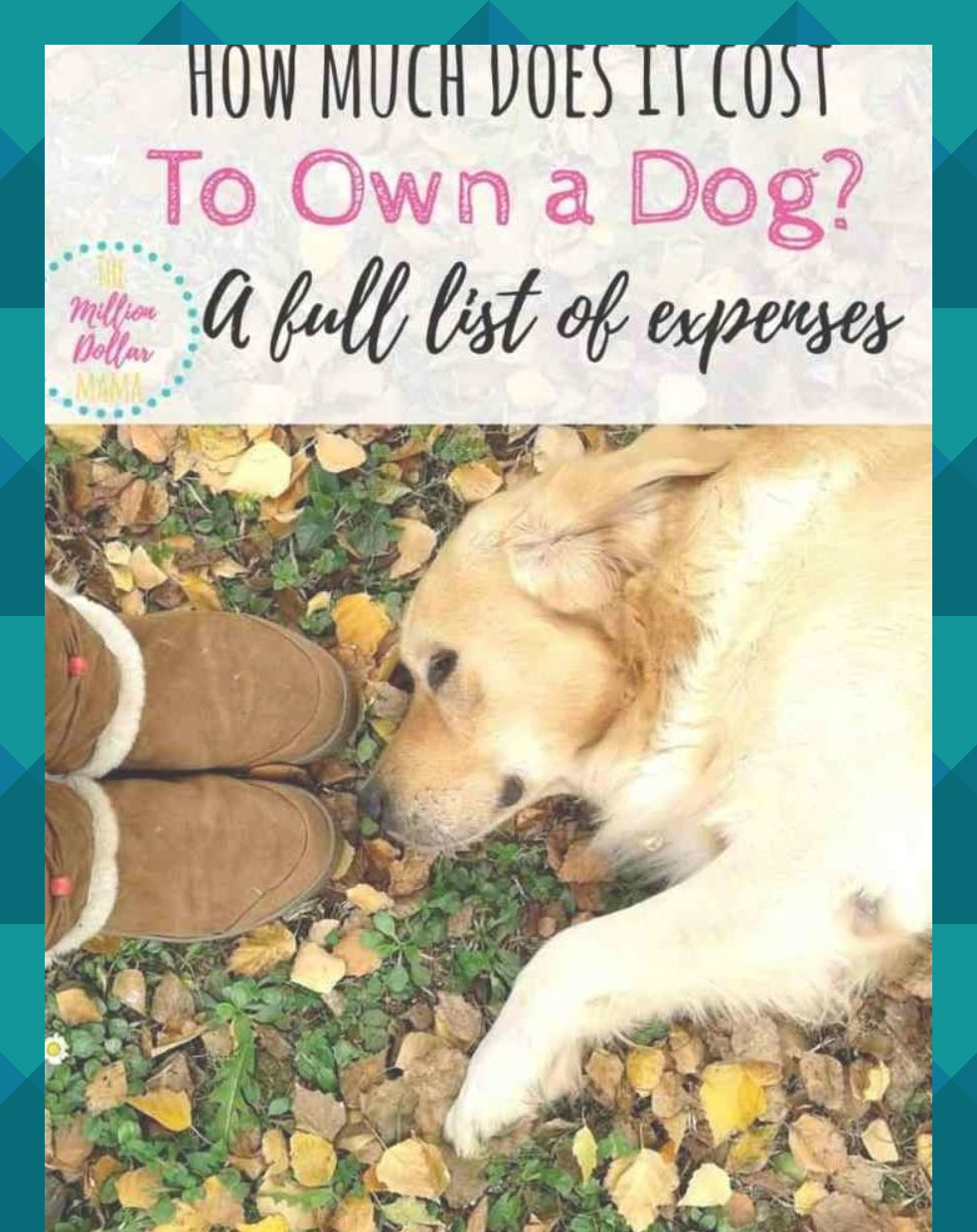 How Much Does It Cost To Own A Dog List Of Pet Expenses Cost Of Pet Ownership How Much Does A Dog Cost Each Year Dog List Pet Ownership