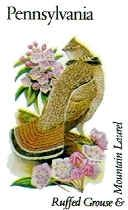 Pennsylvania State Game Bird - Ruffed Grouse AND Pennsylvania State Flower - Mountain Laurel