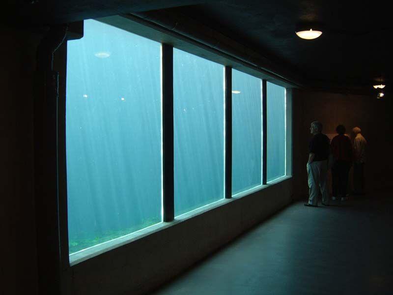 Pond Window Aquarium Design All Glass Aquarium Glass