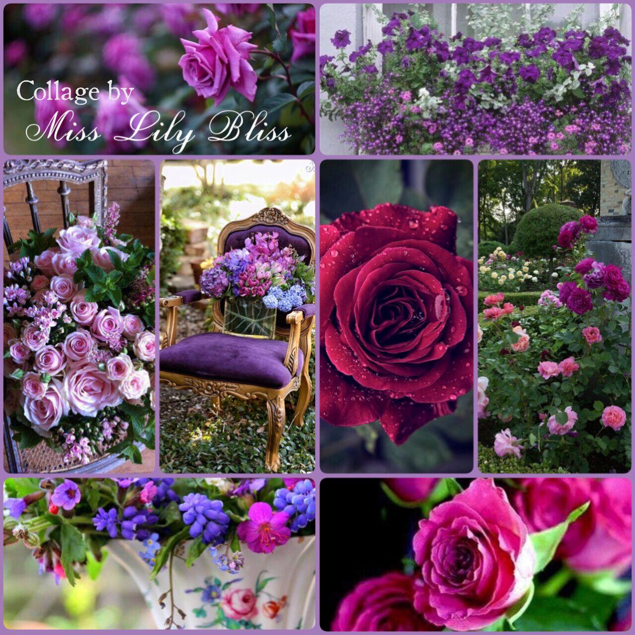 Картинки коллаж розы