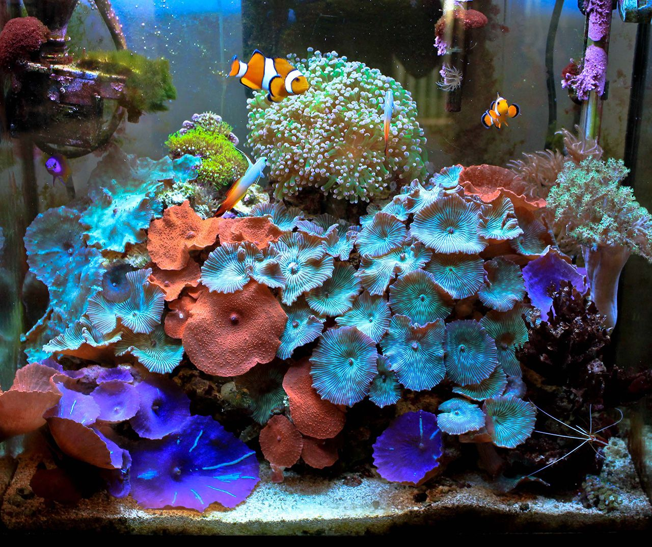 Naturalwonders 2011 featured nano reefs featured for Aquarium nano marin