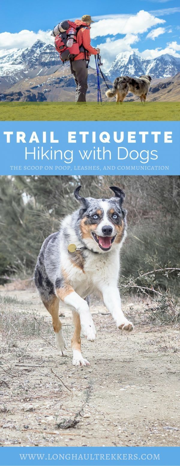 The 10 Commandments Of Hiking With Dogs In 2020 Dog Hiking Gear
