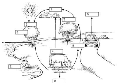 Carbon Cycle Diagram-Organisms in biological ecosystems connect to ...