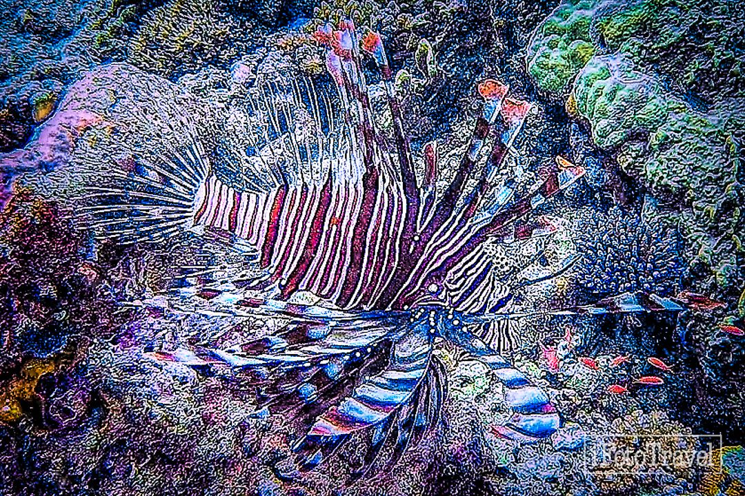 Lion fish, you either love them, or hate them...But whatever, stay away from those venomous dorsal spines!  #diveart #diving #divinglife #divingisawesome #divingworld #divingphotography #photographyfun #photographyart #photographyartistic #photographyartwork #photographicartists #artphoto #artgram, #artforsale #digitalphotography #digitalmedium #fineartphotography #photographydigitalart #fineart #digitalfineart