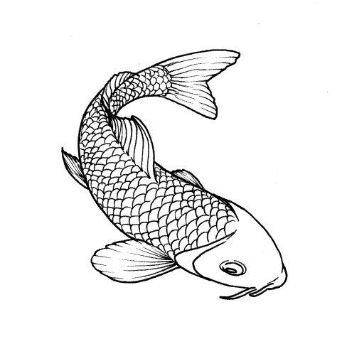 Drawing koi koi pinterest koi art for Koi fish outline
