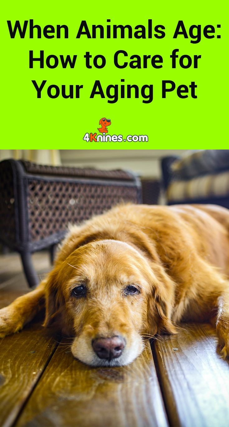 When Animals Age How To Care For Your Aging Pet Elderly Dogs Elderly Dog Care Dog Barking At Nothing