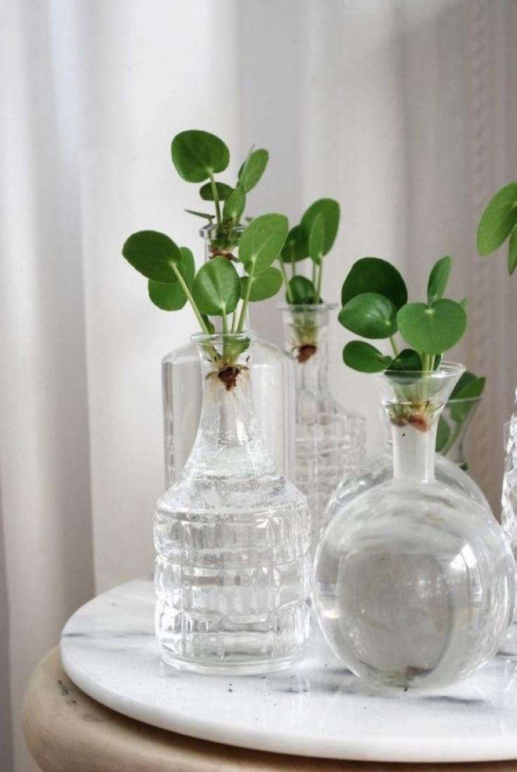Plante D Intérieur A Faire Pousser aqua-culture : comment faire pousser ses plantes d'intérieur