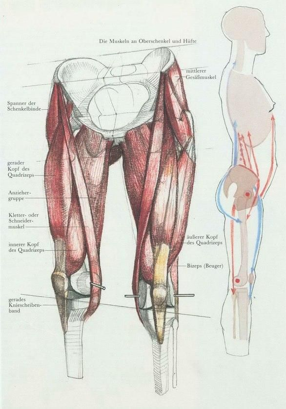 Мои закладки | Tutorials Drawing | Pinterest | Anatomy, Leg anatomy ...