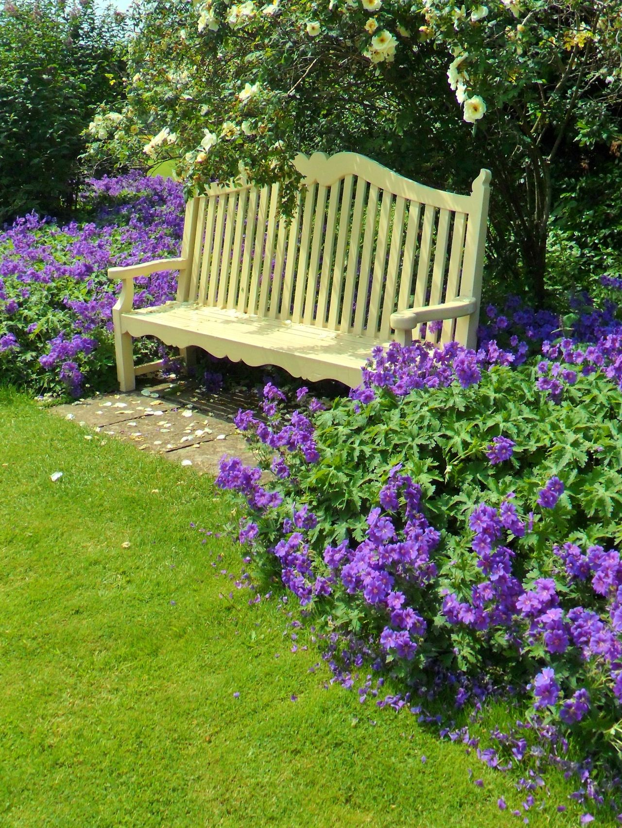 bench with roses and purple flowers