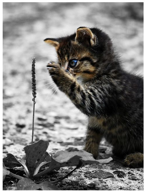Curiosity!!! Soooo cute