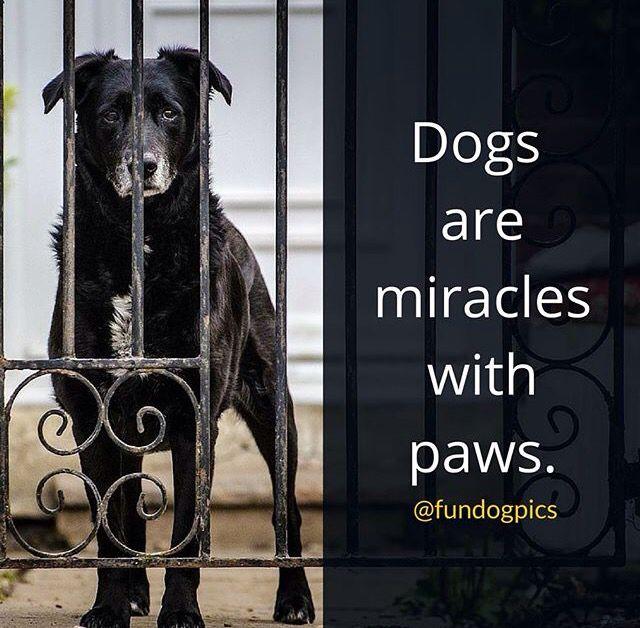 Dogquotes