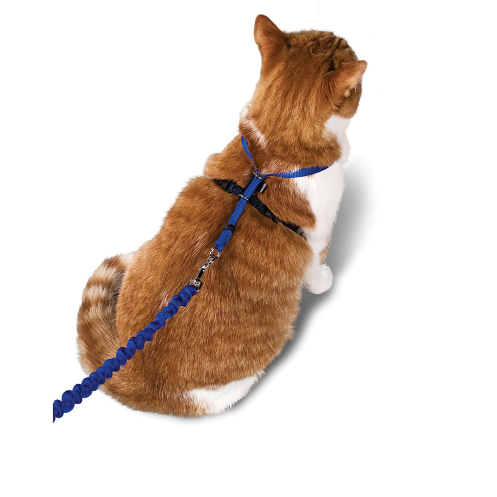 Petsafe Gentle Leader Come With Me Kitty Harness Bungee Leash Petco In 2020 Cat Leash Cat Harness Cat Care
