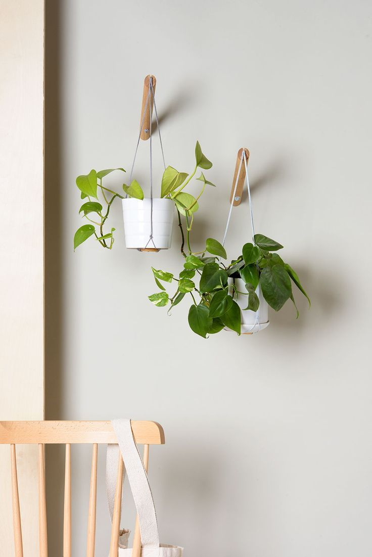 Wall Plant Hanger With Matching Planter is part of Wall plant hanger, Plant wall, Wall plants indoor, Plant pot design, Plant hanger, Indoor plant pots - Planter will ship beginning May 24th Get 10% off when you purchase a plant hanger + planter  A wonderful way to bring nature into your home, our plant hangers hang from the wall allowing you to keep plants even in the tightest spaces   Our matching self watering planters include a pot and saucer  All excess water is kept separate from your plant so it won't die from overwatering (the number one reason for houseplants dying)  Eventually the excess water will go back into your plant, using a self watering mechanism  If you'd like to purchase a plant hanger with no planter click here  PLANT HANGER DETAILSMaterial Oak and Cotton threadSize Hook Length 7  (18 cm) Thread Length from tip of hook until base of planter about 19 in (50 cm) Mounting we supply screws and anchors for mounting on hard walls (ie concrete, brick etc) CYLINDER PLANTER DETAILS Material Made of lightweight aluminumSize Diameter 5 5  (14 5cm) Height 5 5  (14 5cm)Includes planter, saucer, and chord for self watering from excess water ROUND PLANTER DETAILS Material Made of lightweight aluminumSize Diameter 8 6  (22cm) Height 5 9  (15cm)Includes planter, saucer, and chord for self watering from excess water
