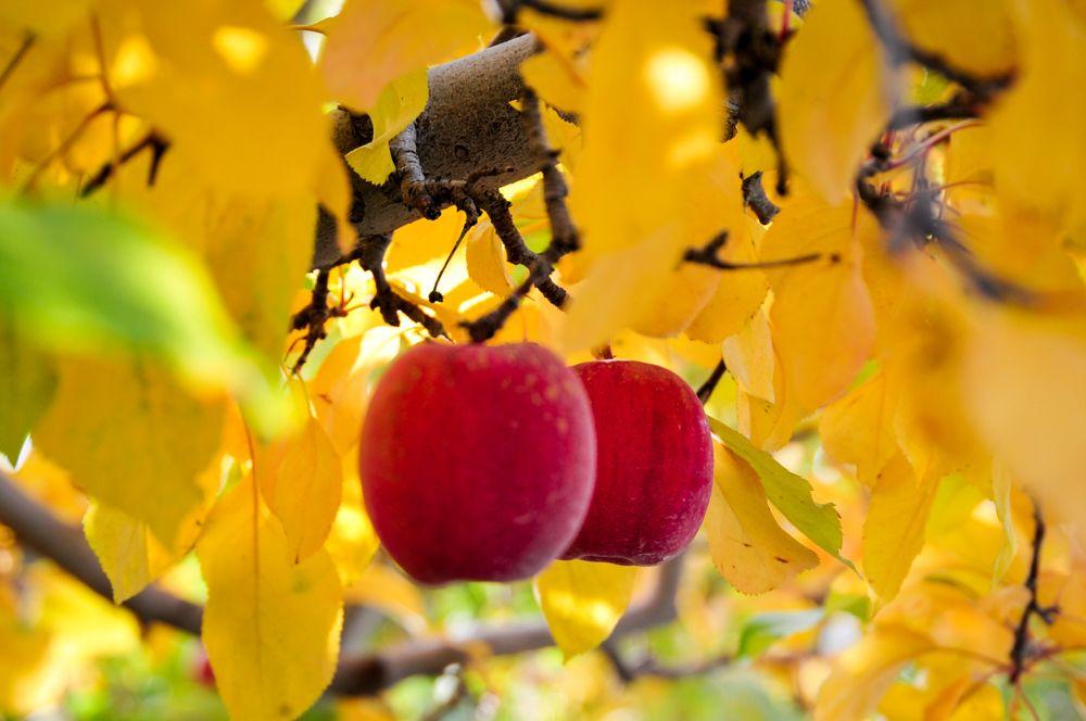 Power of red! Washington apple, Superfruit, Fruit