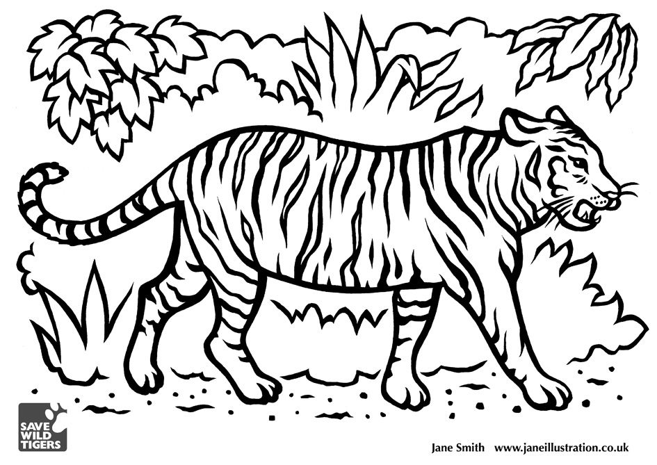 Tiger Drawing For Kids