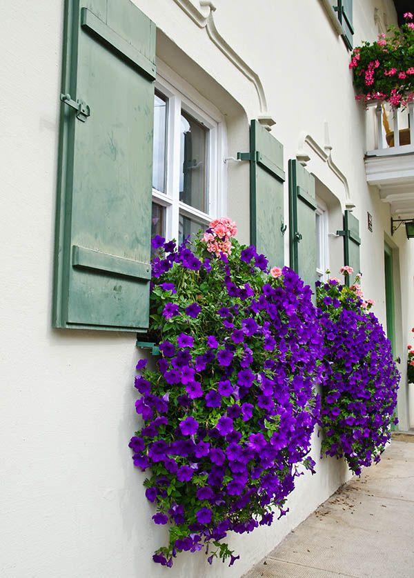 37 Gorgeous Window Flower Boxes Window Box Plants Window Box