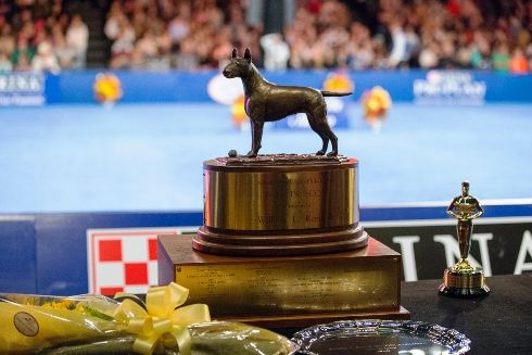 Dog Show Thanksgiving 2020 In 2020 National Dog Show Dog Show Macy S Thanksgiving Day Parade