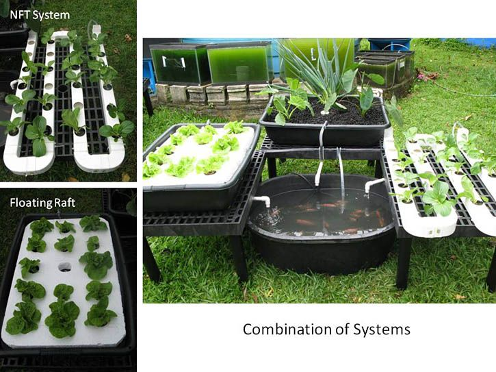 Aquaponics Garden Design find this pin and more on aquaponics garden design Garden Ideas