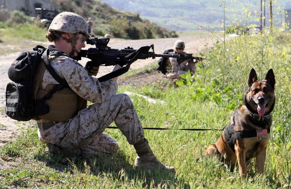 Pin by Steven McDonald on Military dogs Military dogs