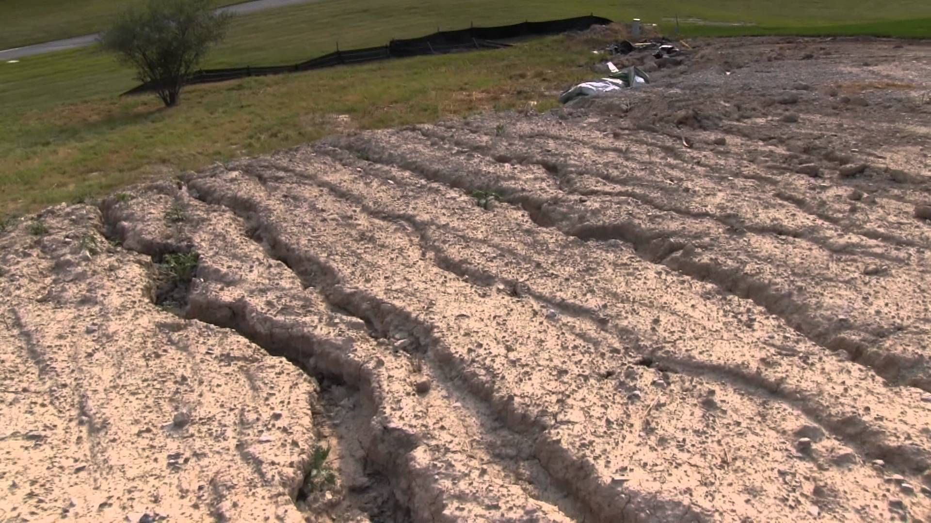 New Construction Sod Needs Help Lawn Sod Lawn Diy Yard