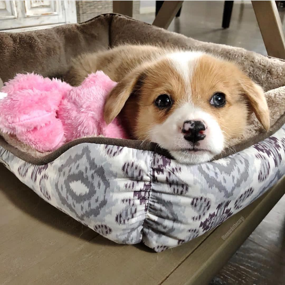 Omg such a cute puppy agree or not double tap and tag someone