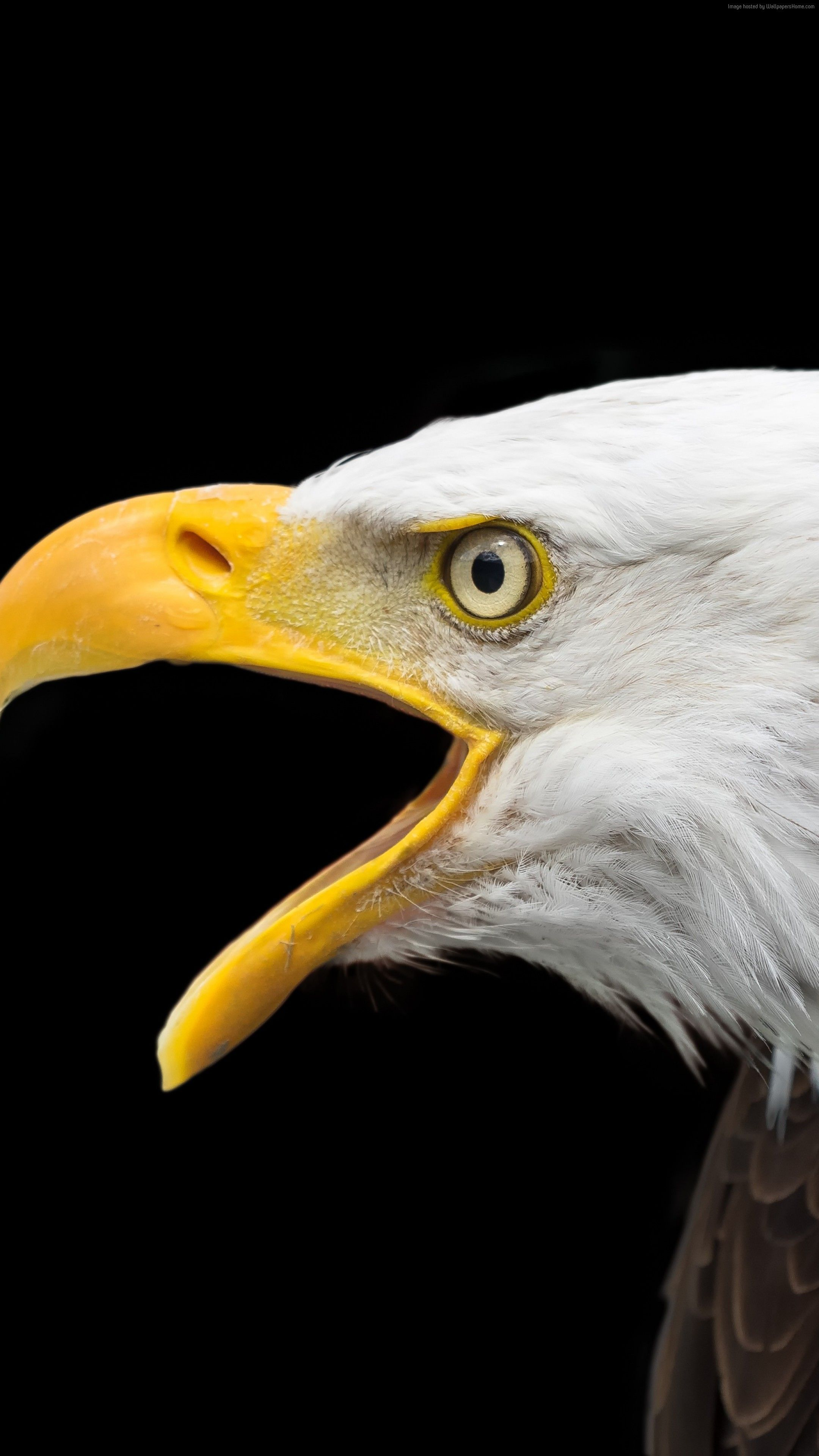 Pin By Wallpaper Hd On Wallpaper Hd Eagle Wallpaper Eagle Eagle