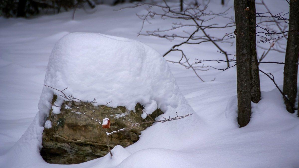 Wordless Wednesday: Snow Puffs???   Winter scenes, Snow