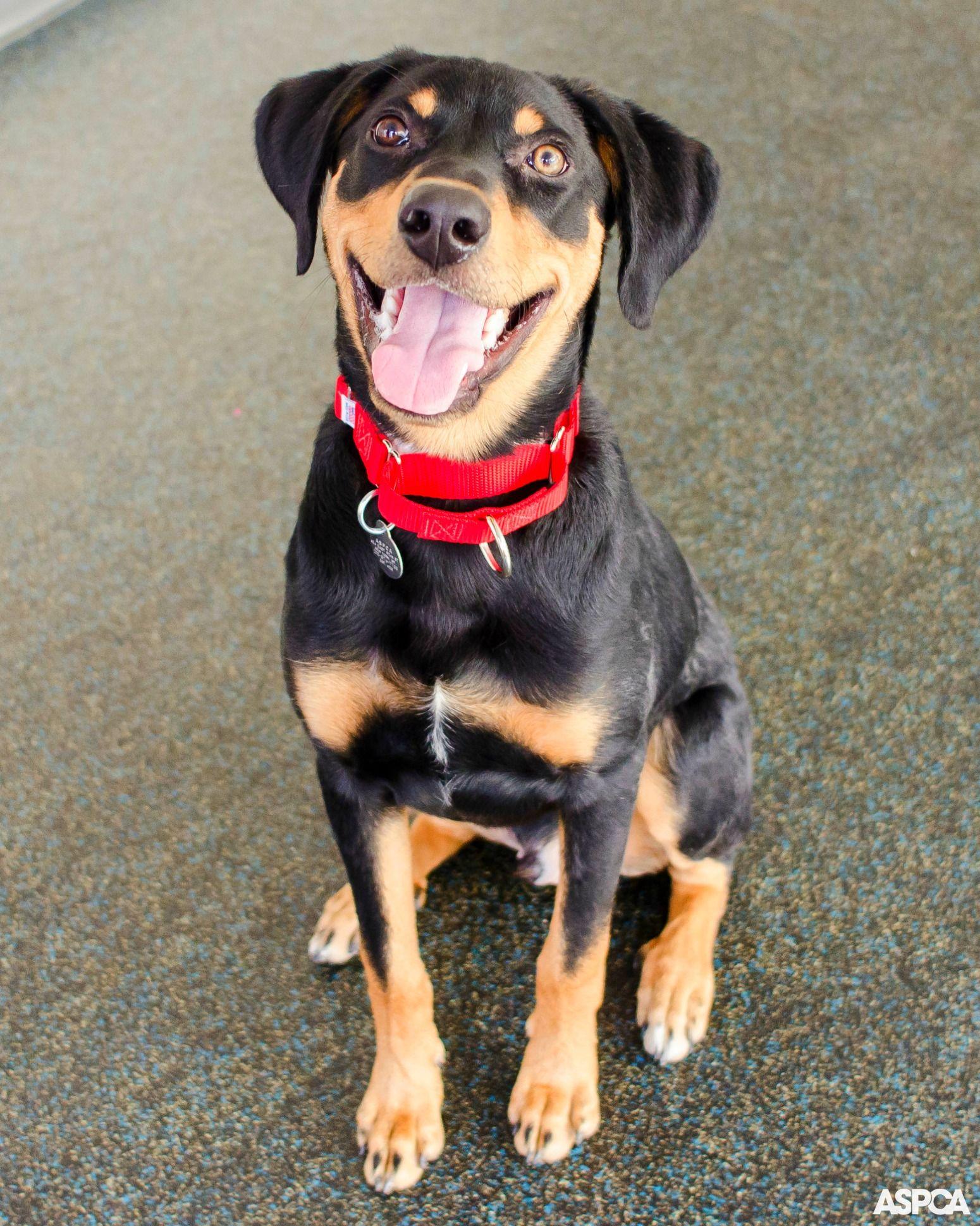 Pet Care Dog care, Pet dogs, Pet care