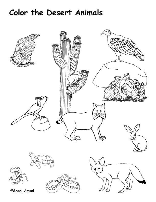 Coloring Pages Plants And Animals : Desert animals coloring page roxaboxen school