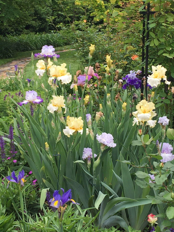 Trial Error And Lots Of Lilies Finegardening Day Lilies Iris Garden Dutch Iris