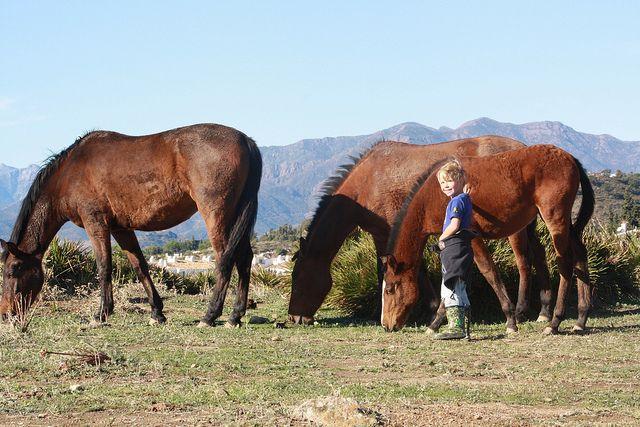 Mijas campo ... horses roam freely in the countryside