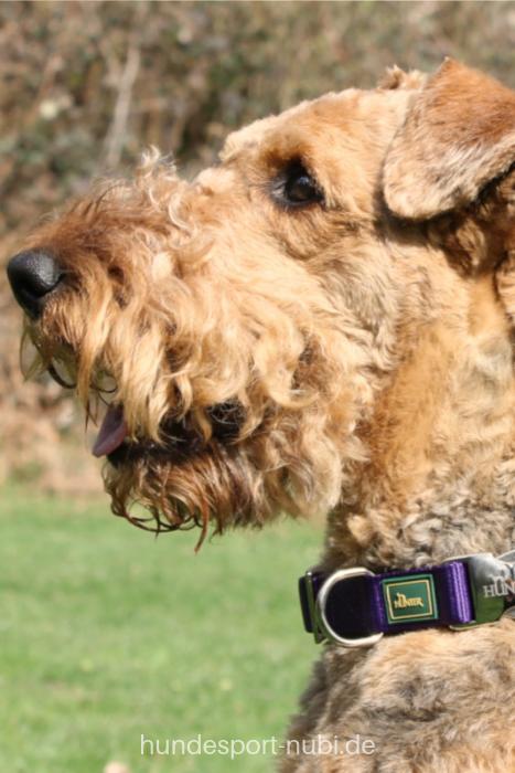 Halsband Hunter Vario Basic AluStrong violett Hunde