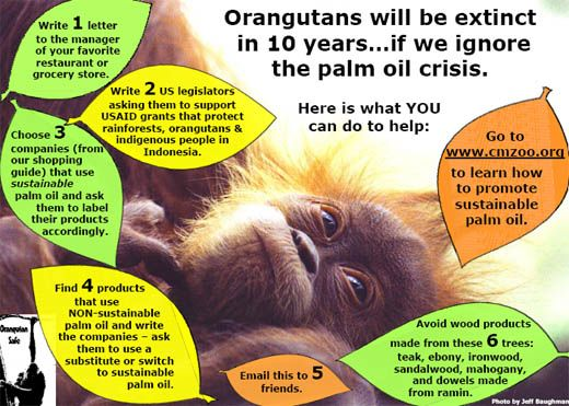 SAY NO TO PALM OIL | Stuff I'm interested in | Pinterest | A well ...
