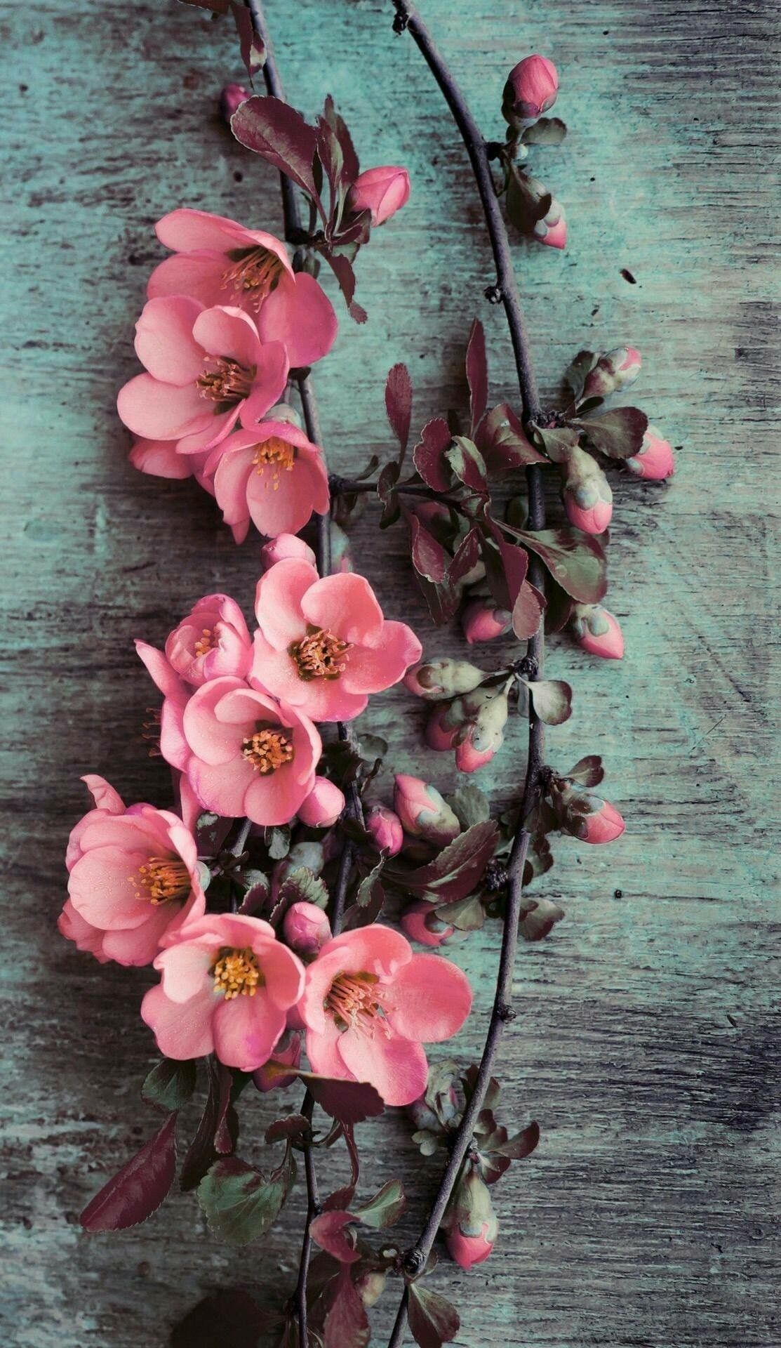 Pretty Pink Climbers Ets With Images Flower Background